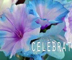 Big Celebration Sale Reminder!  11-27-16